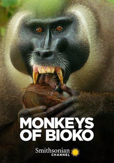 MonkeysofBiokoPosters